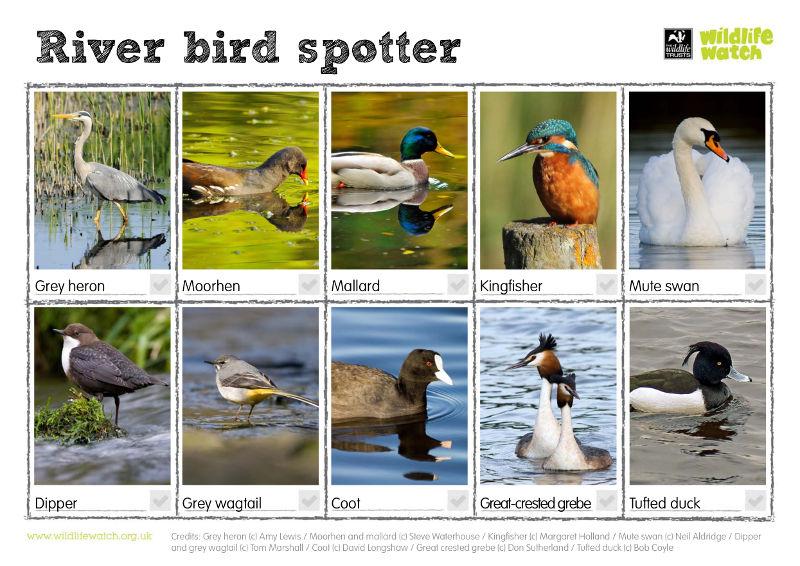 http://danielnouri.org/media/river-bird-spotter.jpg